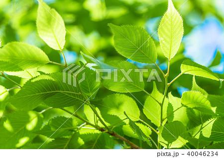 新緑エコイメージ 40046234