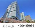 東京ガーデンテラス紀尾井町 桜 染井吉野の写真 40046964