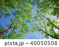 新緑 葉 初夏の写真 40050508