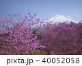 ツツジ ミツバツツジ 花の写真 40052058