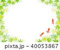 金魚 新緑 楓のイラスト 40053867