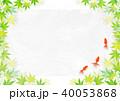 金魚 新緑 楓のイラスト 40053868