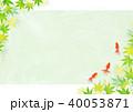 金魚 新緑 楓のイラスト 40053871