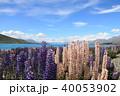 レイク・テカポ ニュージーランド 青空の写真 40053902