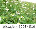 ミツバチ 40054610