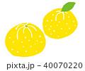 ゆず 柚子 水彩 イラスト 手描き 40070220