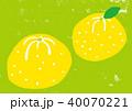 ゆず 柚子 水彩 イラスト 手描き 40070221