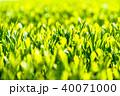 静岡県の茶畑 40071000