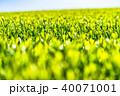 静岡県の茶畑 40071001