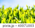 静岡県の茶畑 40071003