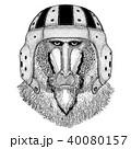 動物 スポーツ ヘルメットのイラスト 40080157