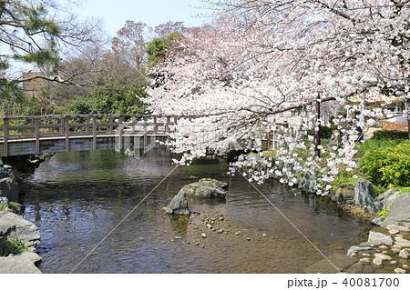 足立区東綾瀬公園 やざえもん橋と桜 40081700