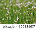 花 植物 野草の写真 40083957