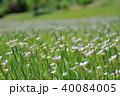 花 植物 野草の写真 40084005