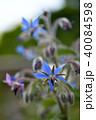 ハーブ 花 植物の写真 40084598