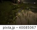 水田とゲンジボタル 40085067