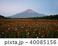 百日草と夏富士 40085156