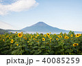 夏富士とひまわり 40085259