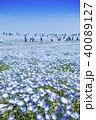 花畑 ネモフィラ みはらしの丘の写真 40089127
