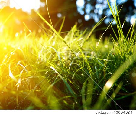 Green grass background, toned bright grass  40094934