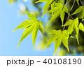 新緑 植物 葉の写真 40108190