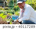 苗 植える 茄子の写真 40117289