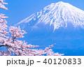 富士山 桜 満開の写真 40120833