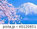 富士山 桜 満開の写真 40120851