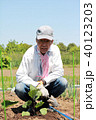 苗 植える 茄子の写真 40123203