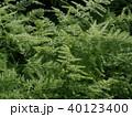 植物 40123400