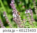 ミツバチ 40123403