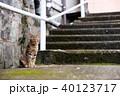 長崎 猫 動物の写真 40123717