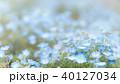 ネモフィラ 青 花の写真 40127034