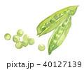 スナップエンドウ スナックエンドウ 豆のイラスト 40127139