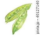 スナップエンドウ スナックエンドウ 豆のイラスト 40127140