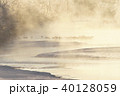 タンチョウ 川霧 冬の写真 40128059