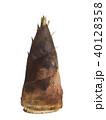 タケノコ 野菜 食べ物の写真 40128358