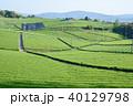 茶園 新緑 茶畑の写真 40129798