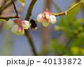 ブルーベリー の花とハナバチ 40133872