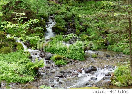 栃木県塩谷町 尚仁沢湧水(5月) 40137650