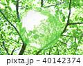 新緑(エコロジーイメージ) 40142374