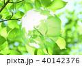 新緑(エコロジーイメージ) 40142376