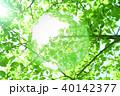 新緑(エコロジーイメージ) 40142377
