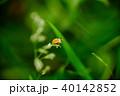 昆虫 虫 蟲の写真 40142852