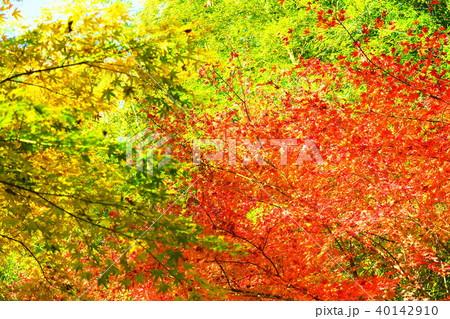 紅葉の風景(埼玉県川口市にて) 40142910
