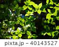 若葉 新緑 緑の写真 40143527