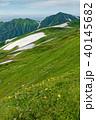 山 ニッコウキスゲ 大日岳の写真 40145682