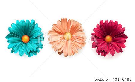 Set of colored chrysanthemum flowers, top view 40146486