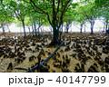 マングローブ 木 植物の写真 40147799