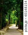 フクギ並木 並木道 夏の写真 40148154